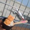 黒胡麻豆乳ソフトクリーム